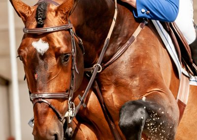fredtigelaar_sport_paardensport_jaarboek_work-004