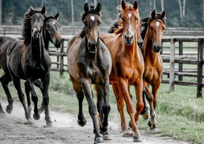 fredtigelaar_sport_paardensport_jaarboek_work-009